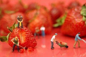 Les fraises, c'est paléo