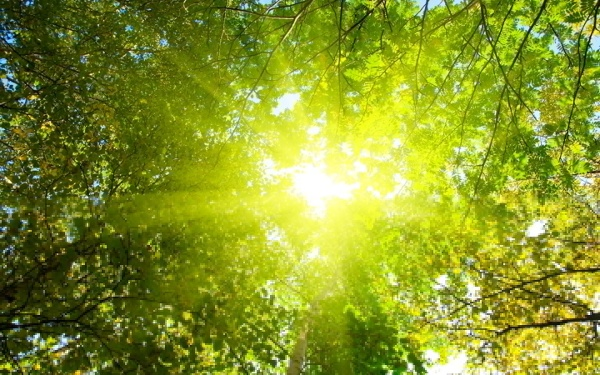 Soleil et paléo