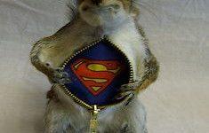 Ne restez pas (trop longtemps) un écureuil en Phase 1
