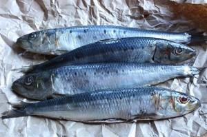 Les sardines, un super aliment paléo