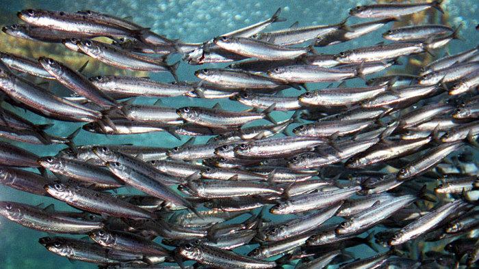 Oui, les sardines sont paléo :)